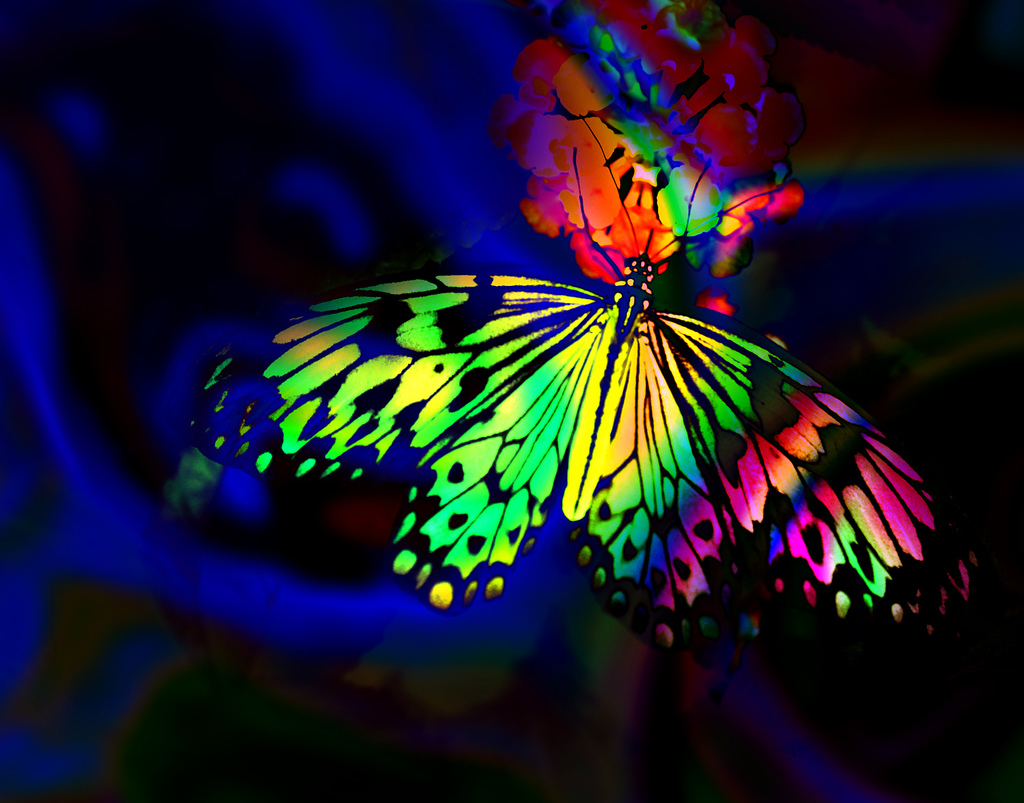 para dibujar in addition rainbow butterfly on nice