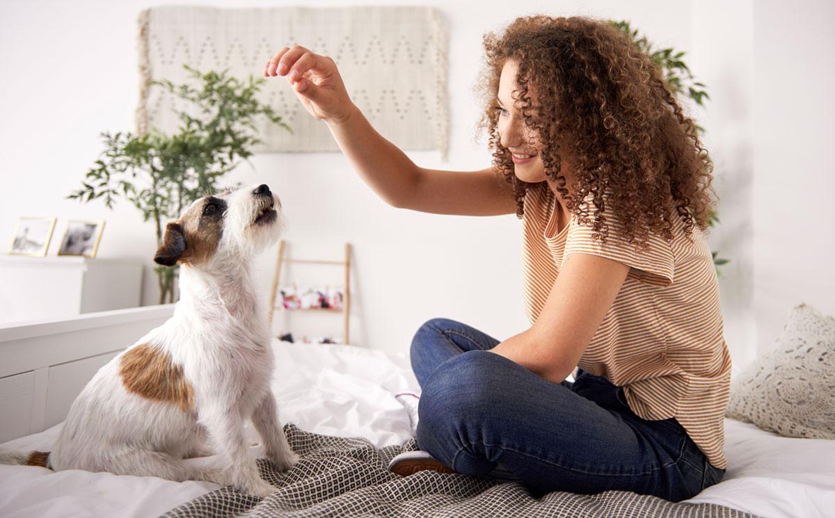 Claves para el bienestar de perros y gatos durante el Covid-19 ...