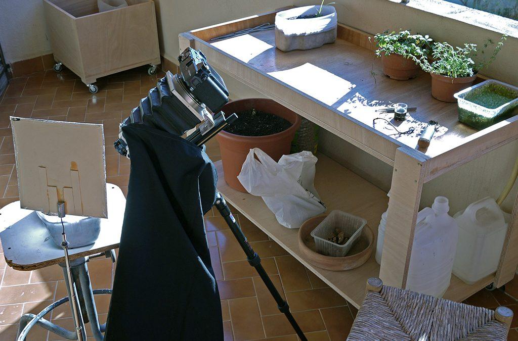 Nos estamos tecnificando, hemos montado una mesa para poder seguir planta viva en casa.