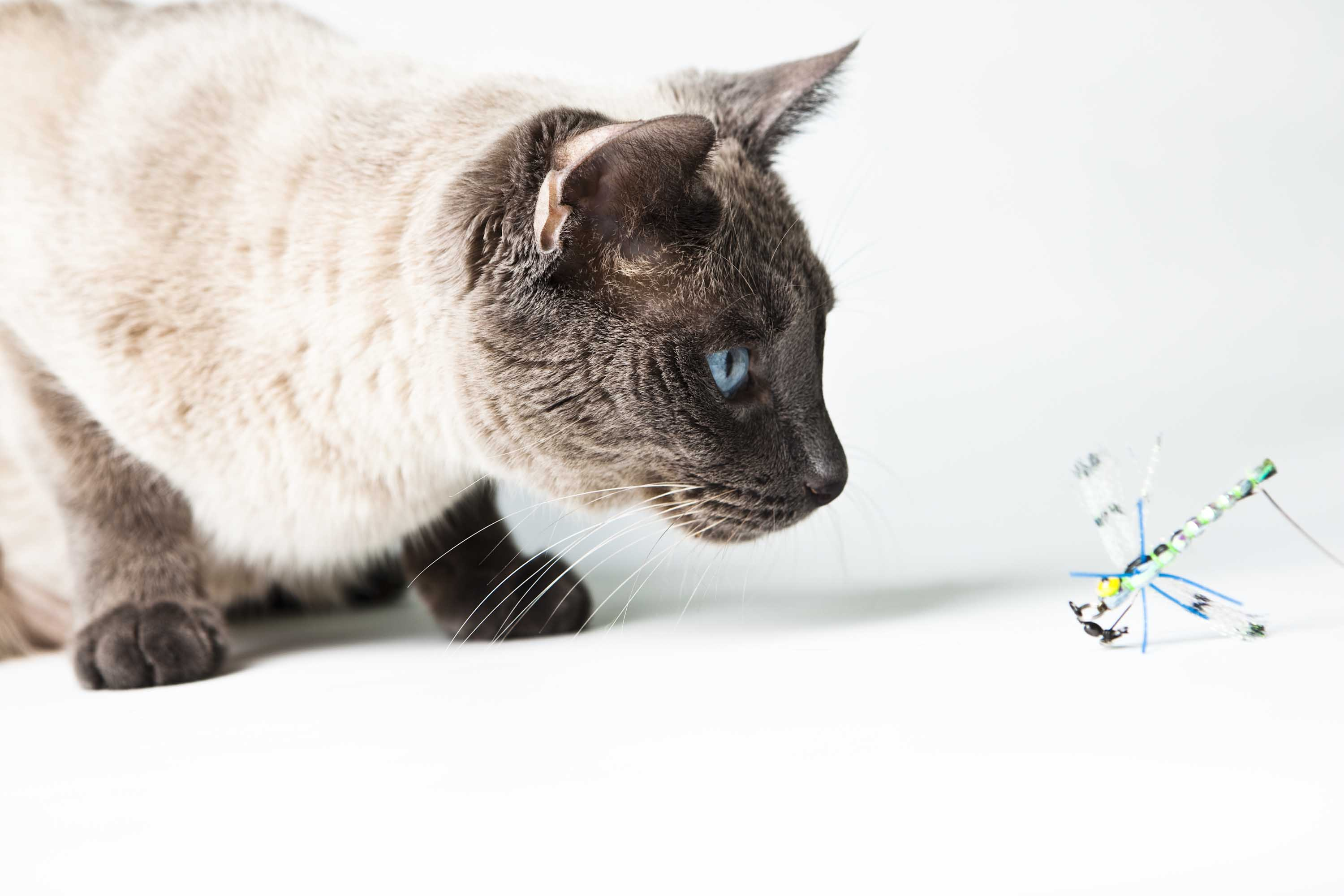 Toy Flying Bird Cats