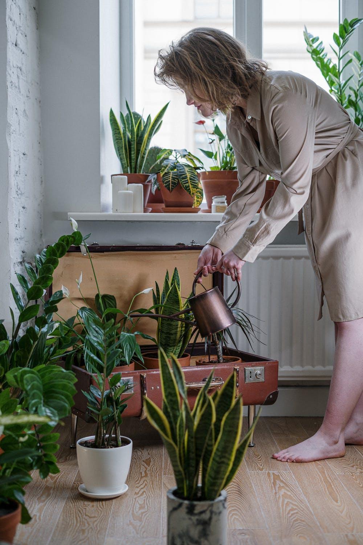 indoor house plant