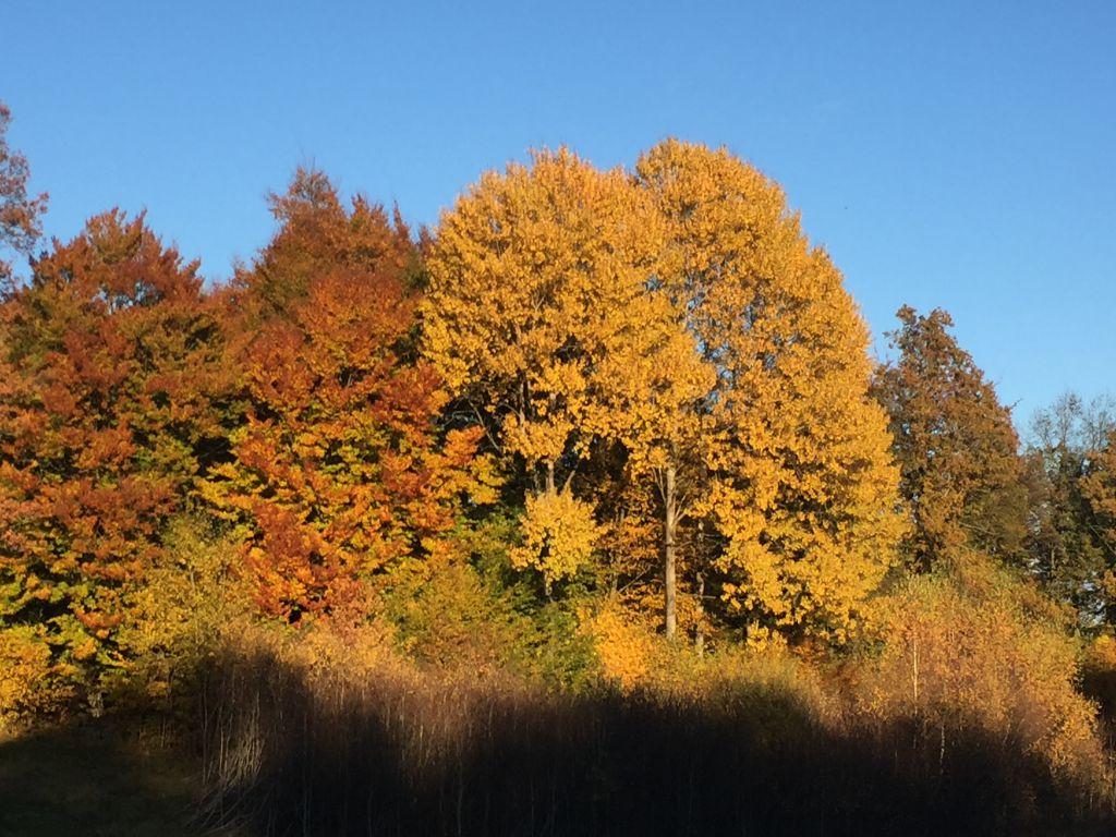 Hösten har kommit till funderset efter en underbar sommar