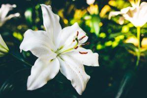 funeraria-el-angel-flor