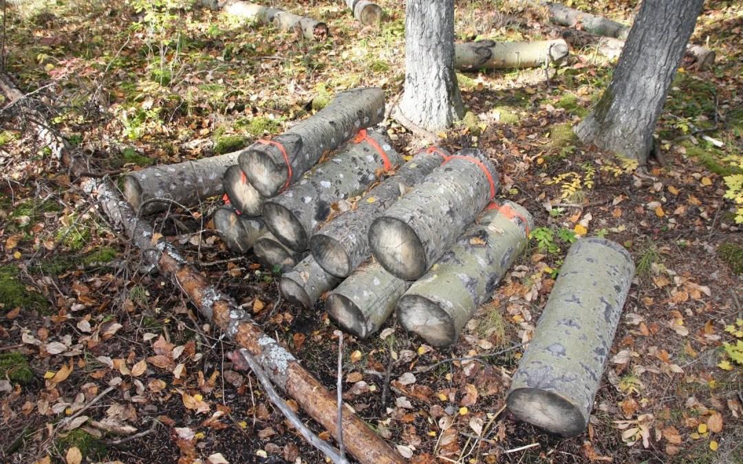 More log experiments