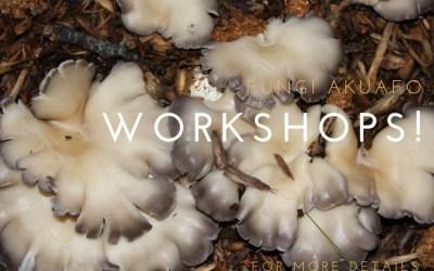 Fungi Akuafo Spring/Summer workshops