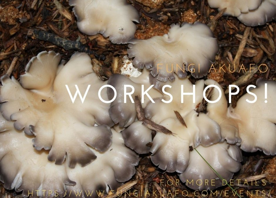 Fungi Akuafo Spring/Summer workshops
