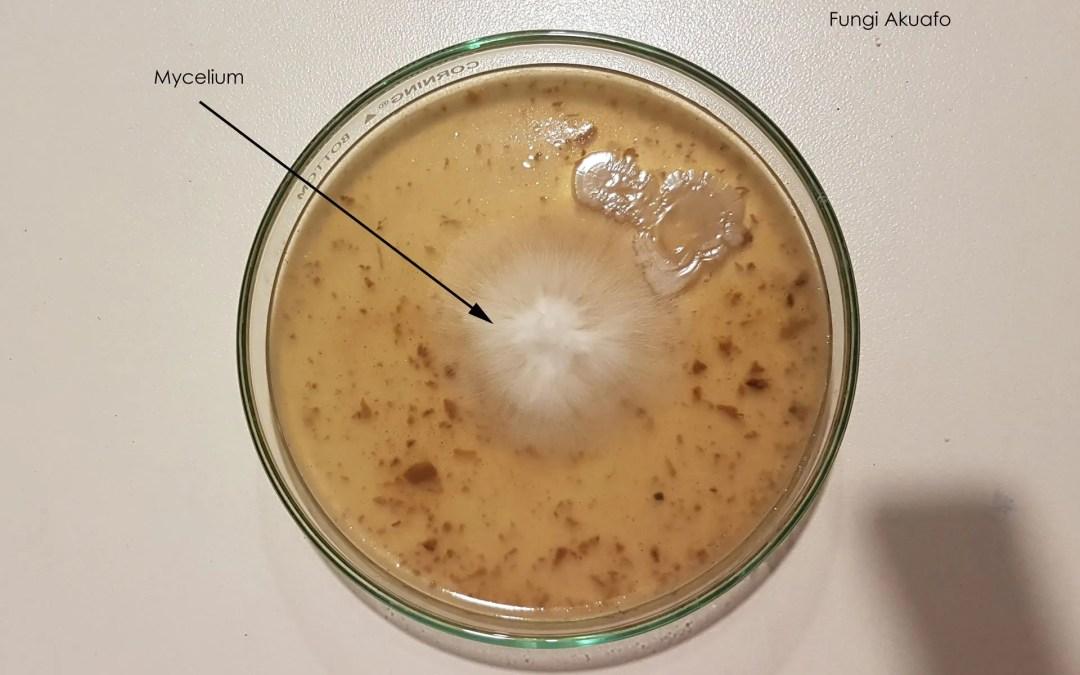 Contaminated petri
