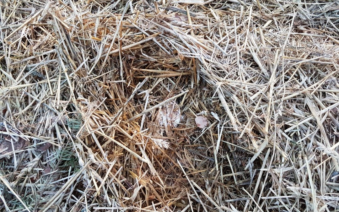 Forgotten wood chip bed