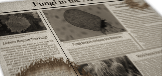 Fungi in the News Image