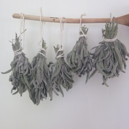 Drying sage to use during the winter months. http://www.funhappinessandlife.com/five-uses-for-sage