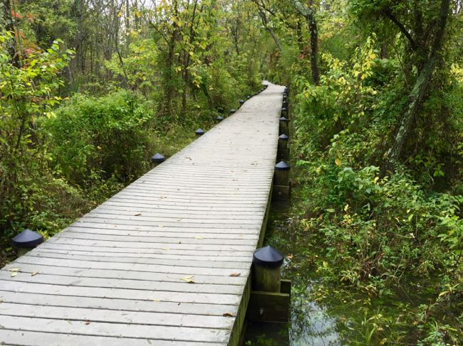 Roosevelt Island boardwalk after rains