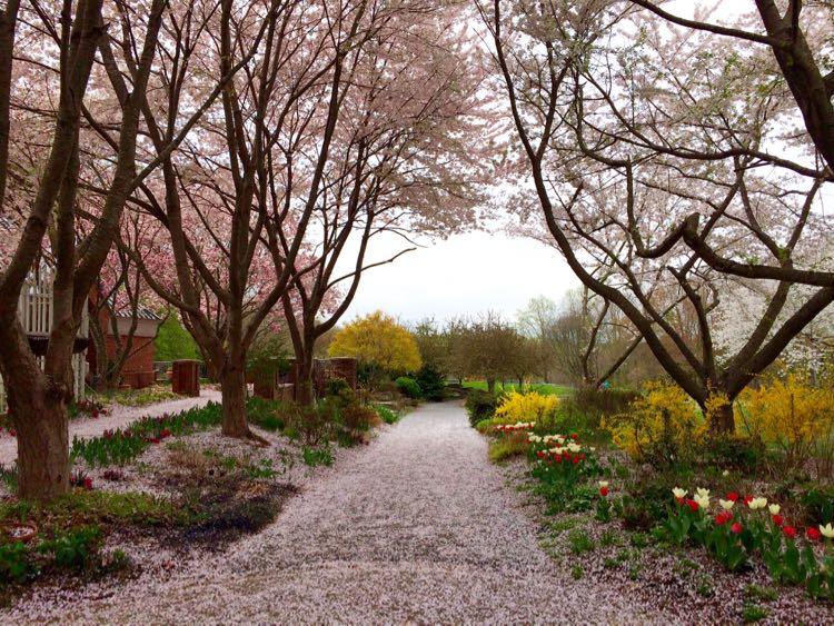 Meadowlark path of petals Vienna Virginia