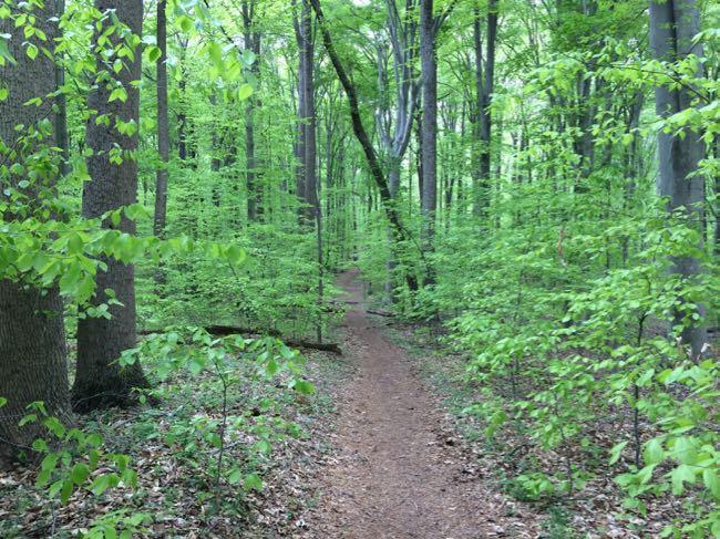 Spring trail Seneca Tract