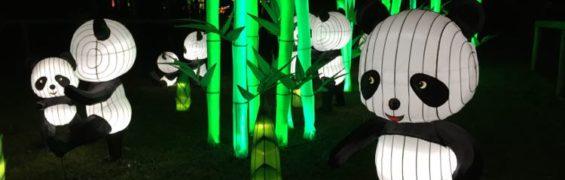 Chinese Lantern Festival pandas