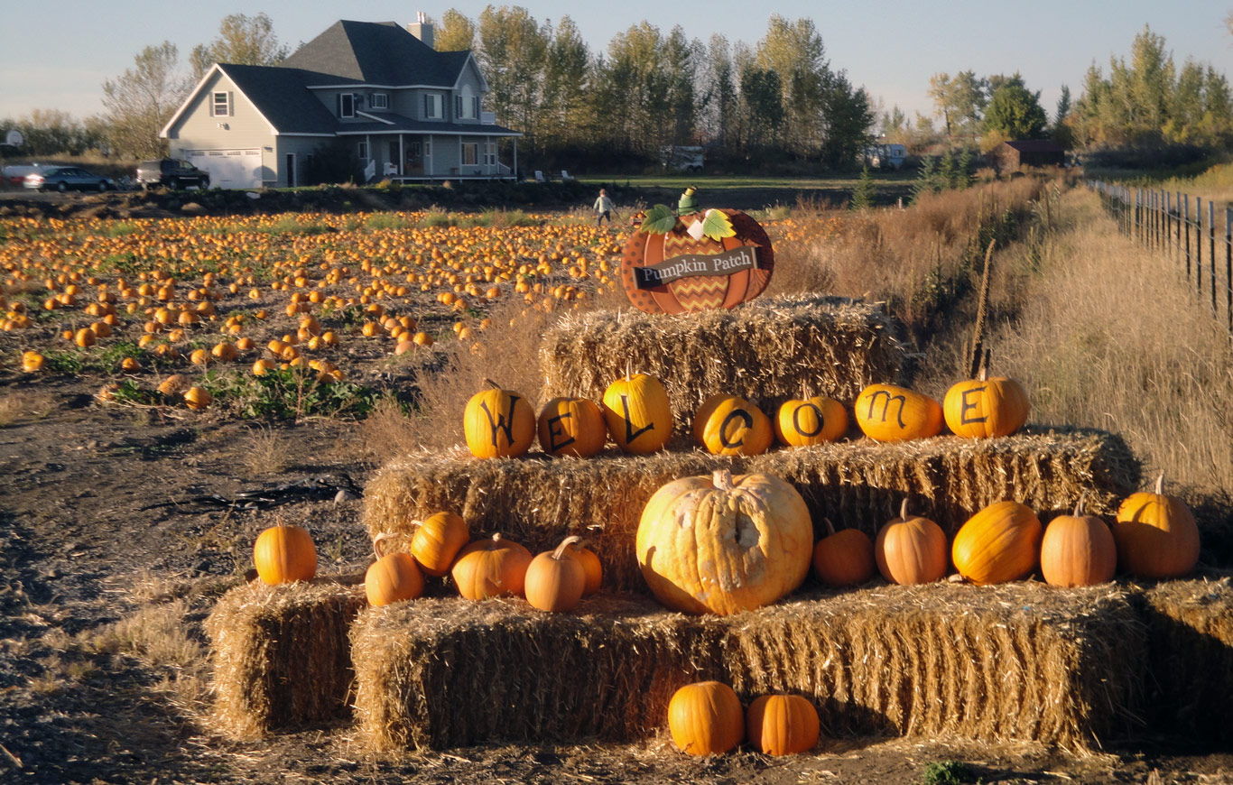 Image result for pumpkin patch rexburg