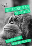 Birthday Animals Birthday Card You Live In A Zoo Funky Pigeon