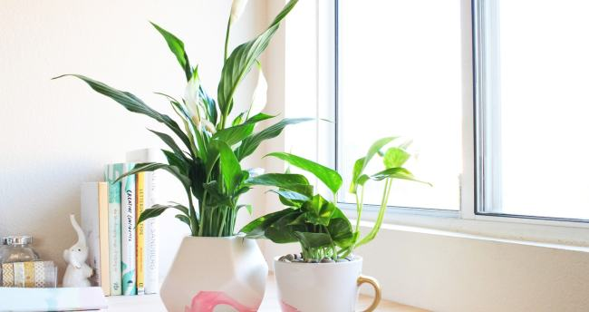 Handmade gifts for Mom. Love this DIY marbled mug planter! Easier than you might think to make yourself.