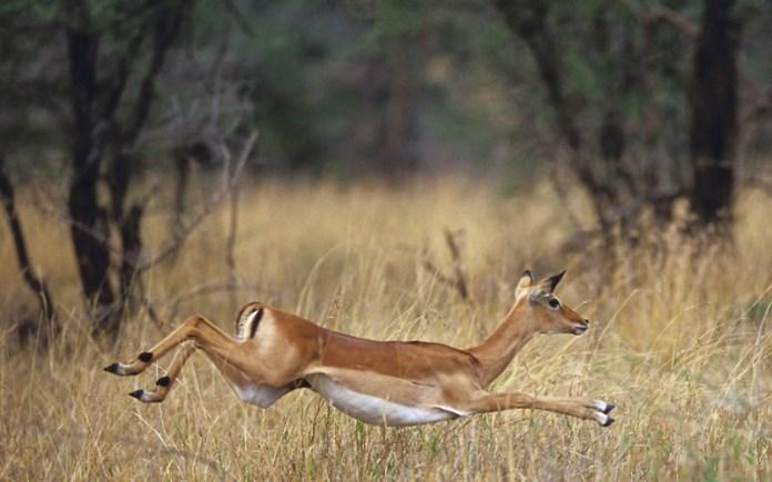african-animals (9)