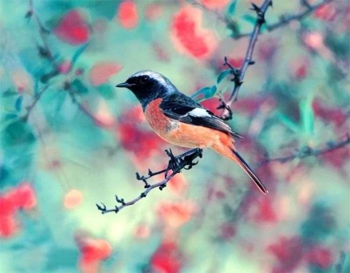 colorful bird (2)