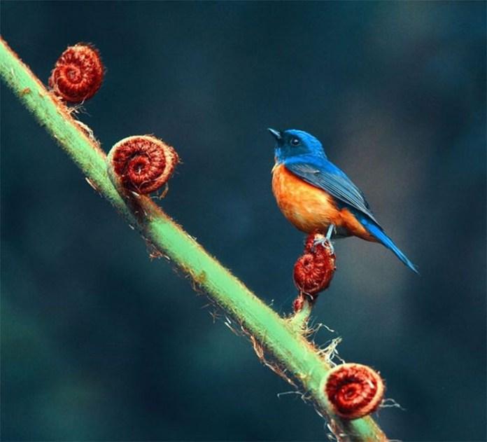 colorful bird (6)
