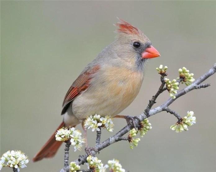 colorful bird (9)