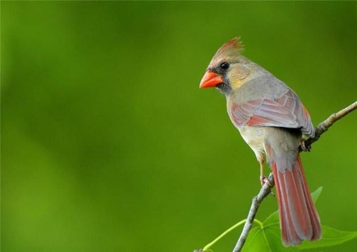 colorful bird (10)
