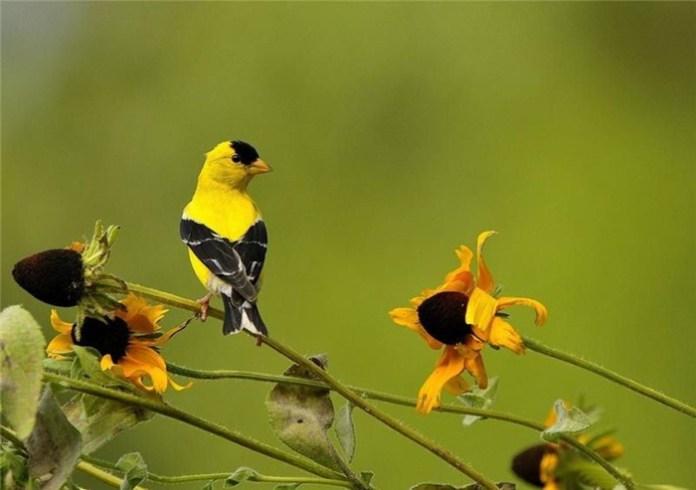 colorful bird (14)