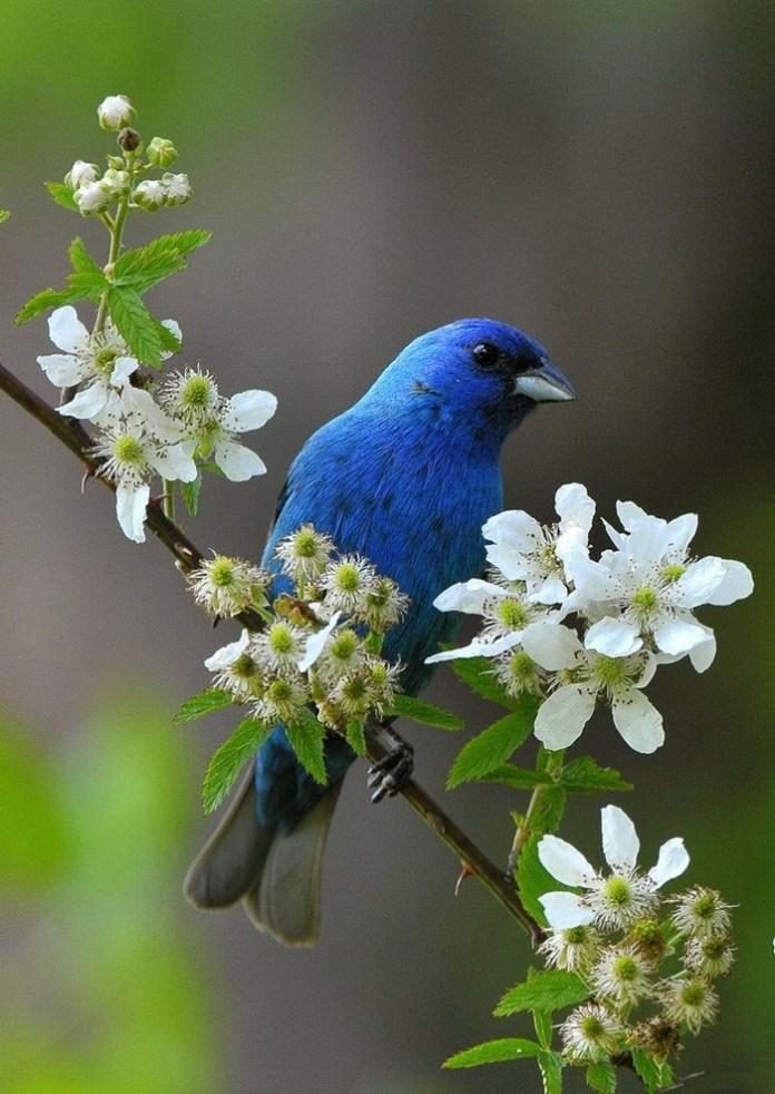 colorful bird (16)