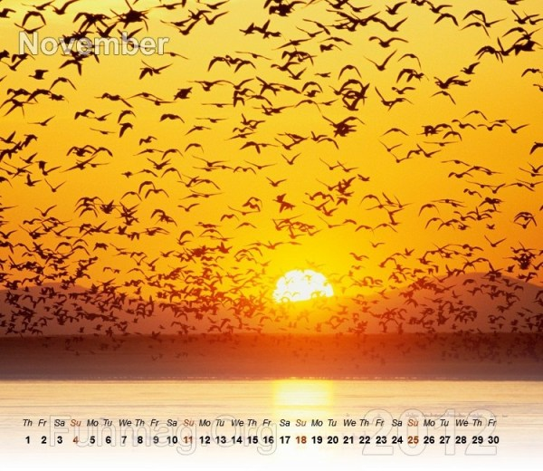 nature-calendar-11