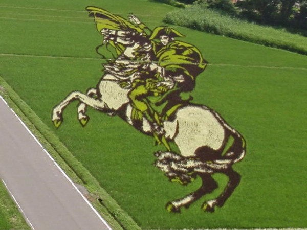 rice paddy art (5)