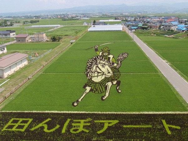 rice paddy art (17)