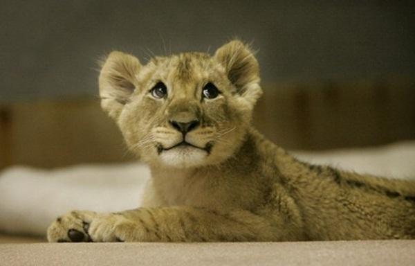 cute-baby-animals- (4)