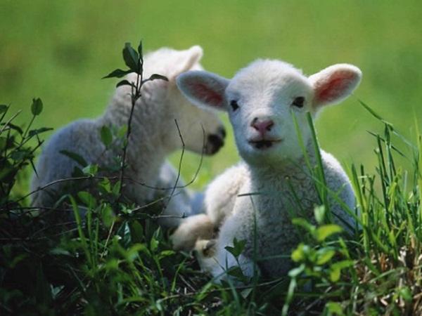cute-baby-animals- (7)