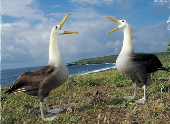 animals-and-birds- (2)