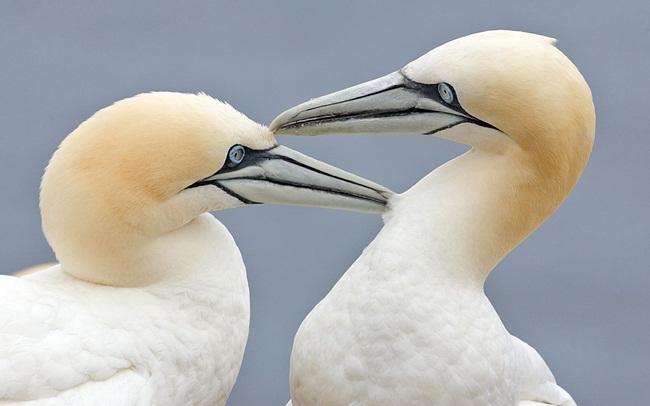 animals-and-birds- (20)