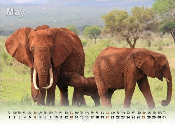 animals-calendar- (5)