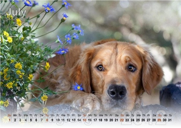 animals-calendar- (7)