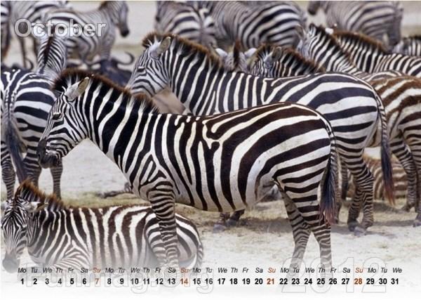 animals-calendar- (10)