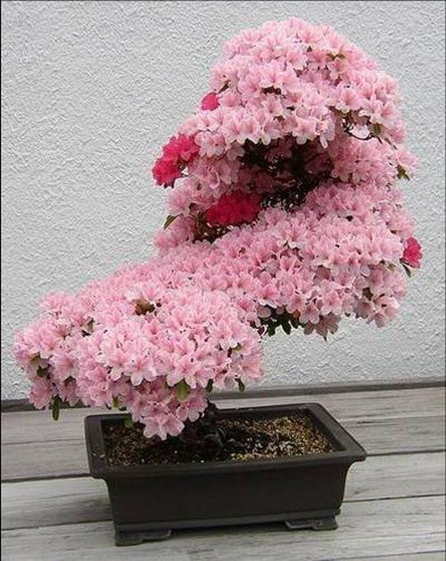 flower-bonsai-tree- (23)