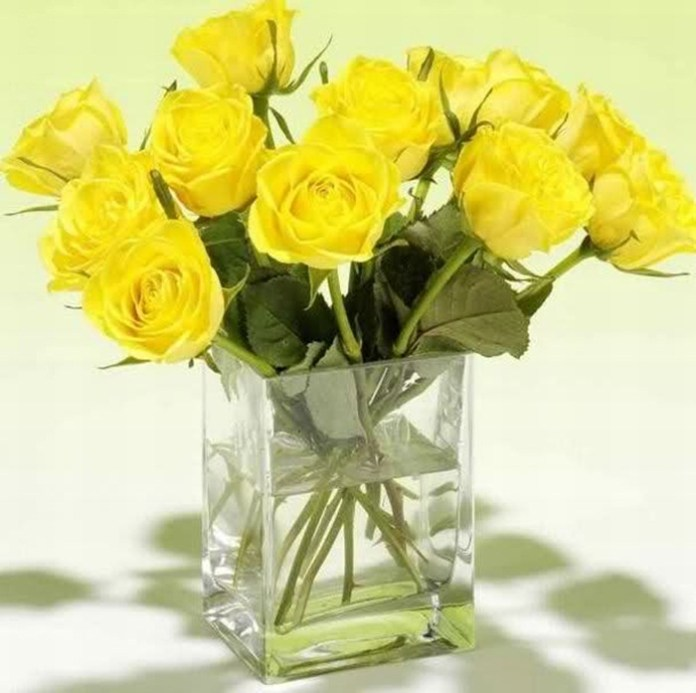 picture-of-yellow-roses- (8)