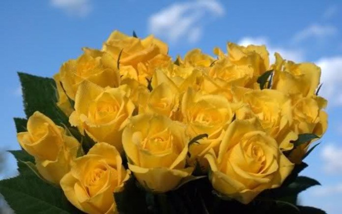 picture-of-yellow-roses- (21)