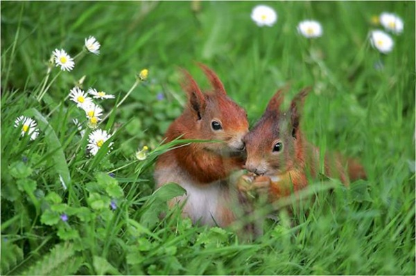 twin-animals- (10)