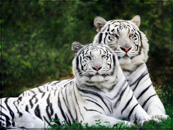 wildlife-photos- (1)