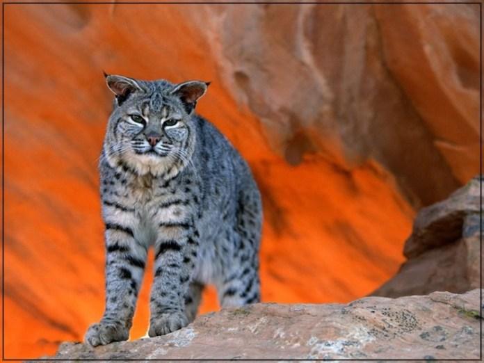wildlife-photos- (5)