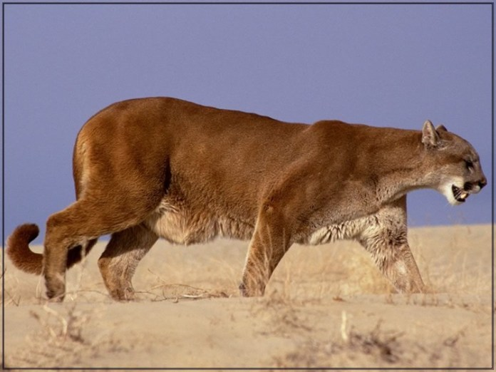 wildlife-photos- (8)