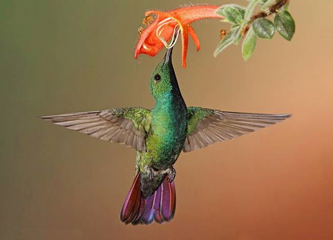 colorful-hummingbirds- (1)