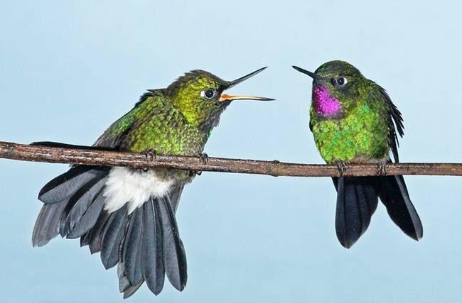 colorful-hummingbirds- (19)