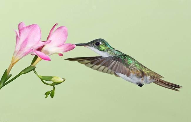 colorful-hummingbirds- (33)