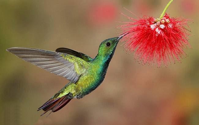 colorful-hummingbirds- (35)