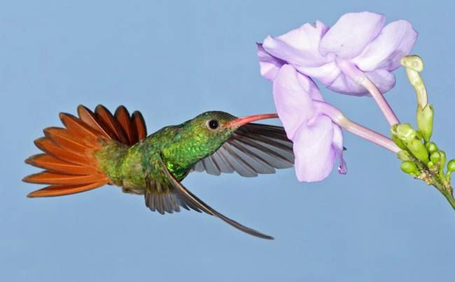 colorful-hummingbirds- (37)